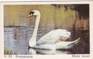 Trade Card Dandy Gum Wild Animals H 83 Mute Swan