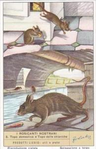 Liebig S1601 Rodents No 3 Mouse
