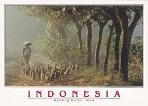 Herding Ducks in Java, Indonesia - Birds