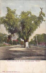 Washington's Elm, Cambridge, Massachusetts, 00-10s