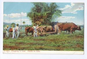 Ploughing in Cuba Rotograph UDB ca 1905