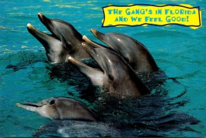 Florida Marineland Porpoises The Gang's In Florida and We Feel Good