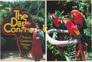 Florida Tampa Busch Gardens Welcome Sign & Colorful Macawas 1981