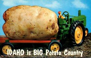 Idaho Is Big Potato Country Exageration Farmer With Large Potato 1959