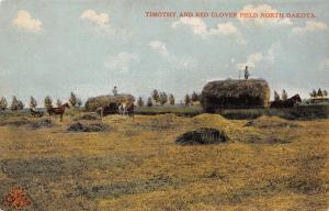 North Dakota: Workers in the Timothy & Clover Fields~Bales~Horse & Buggy c1908