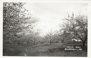 RP,  BRATTLEBORO, Vermont, 40-50s; Orchards