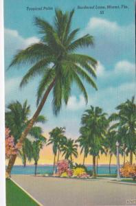 Florida Miami Tropical Palm Bordered Lane