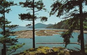 Canada Log Booming Grounds Vancouver Island British Columbia