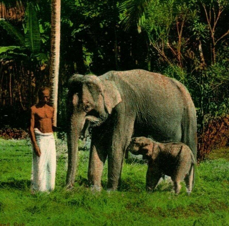 Vtg Carte Postale 1910s Ceylan Sri Lanka Homme Avec Éléphant & Bébé Main Teinté