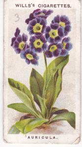 Cigarette Card Wills Old English Garden Flowers 2nd Series No 3