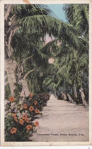 Florida Trees Cocoanut Trail Palm Beach