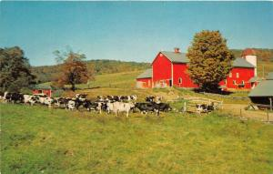 Pennsylvania~Typical Dairy Farm Scene~Holstein Cows in Pasture~Barn~1950s Pc