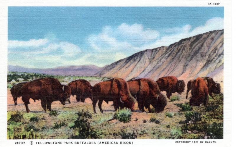 YELLOWSTONE NATIONAL PARK Haynes Linen Series. 21207.