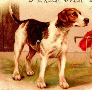 Vtg Postcard 1903 UDB Tuck's Write Away - Foxhound Dog at Attention