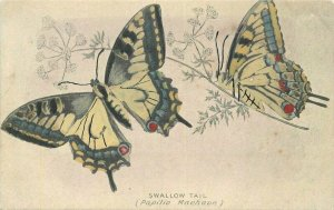 Butterfly Swallow tail C-1910 Postcard Artist impression 21-5735