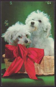 Puppies in a Basket Postcard