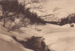AD: Norwegian Medicinal Cod Liver Oil , Wilse , Norway , 1910-20s ; Snow Begi...