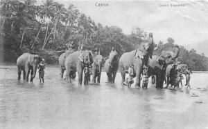 Sri Lanka Ceylon, Elephants, Ceylan