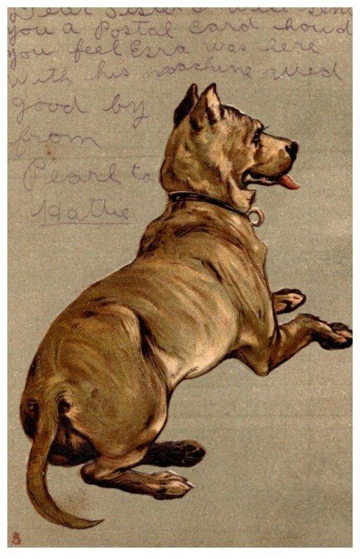 Dog , Large