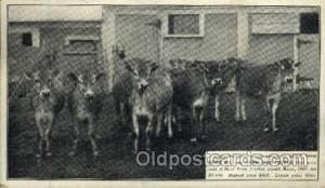 Hood Farm Pogis, Lowell Mass, USA 1907, Farming Postcard Post Card Unused