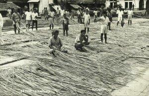 indonesia, CELEBES SULAWESI MAKASSAR, Selecting Rattan (1920s) RPPC Postcard