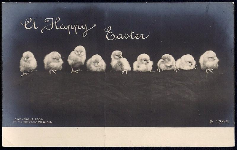 Happy Easter chicks in a row RPPC unused c1906