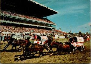 Chuckwagon Races Calgary Stampede Calgary AB Vintage Postcard C3