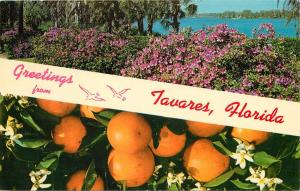 GREETINGS FROM TAVARES FLORIDA FL pm 1968 1960's POSTCARD