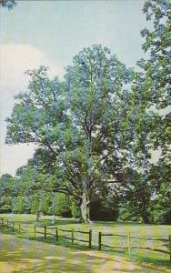 Tennessee Lexington World's :argest Pecan Tree Natchez Trace State Park