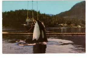 Killer Whale, Garden Bay Pender Harbour, British Columbia,