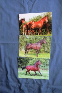 Three Horse Irene Hohe Postcards, Riding Ponies, Horses, Mares, Foals, Stallions
