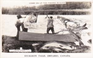 Canada Ontario Sturgeon Falls Men Catching Large Fish Exageration Real Photo