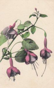Fushia Flowers , 00-10s