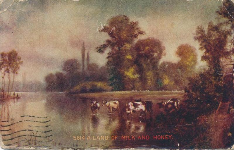 Cows in Stream - A Land of Milk and Honey - DPO 1909 at Barnard NY - DB