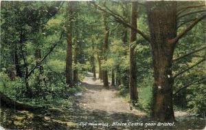 Bristol UK~The Pine Walk at Blaize Castle 1910