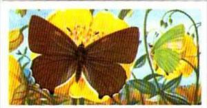 Brooke Bond Tea British Butterflies No 36 Green Hairstreak