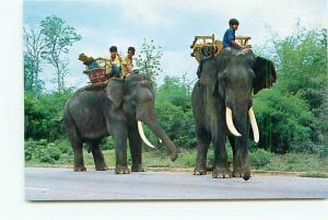 Postcard Elephants North Thailand Children Elephant Saddle tusk   # 3681A