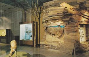 Alberta's Mammals,  Provincial Museum and Archives of  Alberta,  Edmonton,  A...