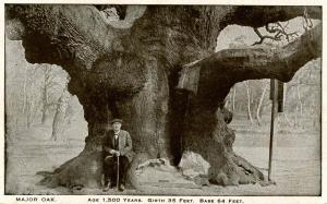 UK - England, Sherwood Forest. Major Oak