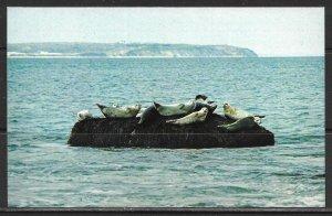 Rhode Island, Block Island - Mohegan Bluffs - Winter Visitors - [RI-127]