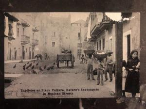 Mint Mexico RPPC Postcard Zapilotes Or Black Vulture In Mexican Streets