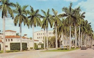 Royal Palm Way showing Four Arts in the Background Palm Beach, Florida