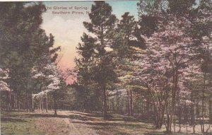 North Carolina Southern Pines The Glories Of Spring Albertype
