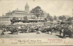 south africa, PIETERMARITZBURG, Market Day, Cows (1899) Stamp