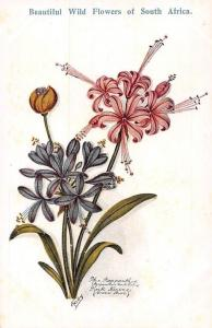South Africa Flora Beautiful Wild Flowers, Pink Nerine, Blue Agapanthus, Kaby