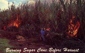 Burning Sugar Cane Before Harvest in Hawaii