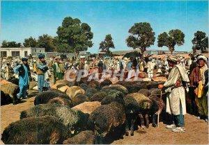 Postcard Modern Stockyard Kabul Shepherds Sheep