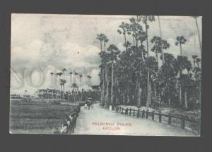 079069 Ceylon Palmirah Palms & carriage Vintage Plate & Co PC