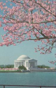 Washington D C Jefferson Memorial and Cherry Blossoms
