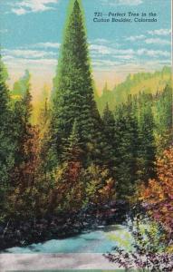 Colorado Perfect Tree In The Canon Boulder
